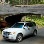 Sequoia National Park, America