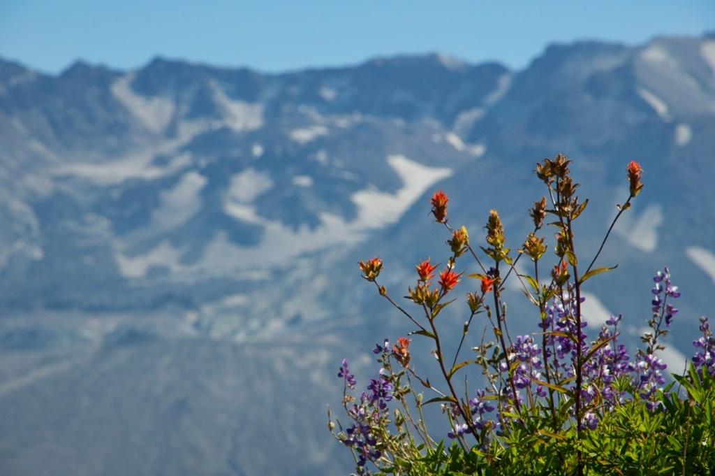 Mount st Helens in Amerika