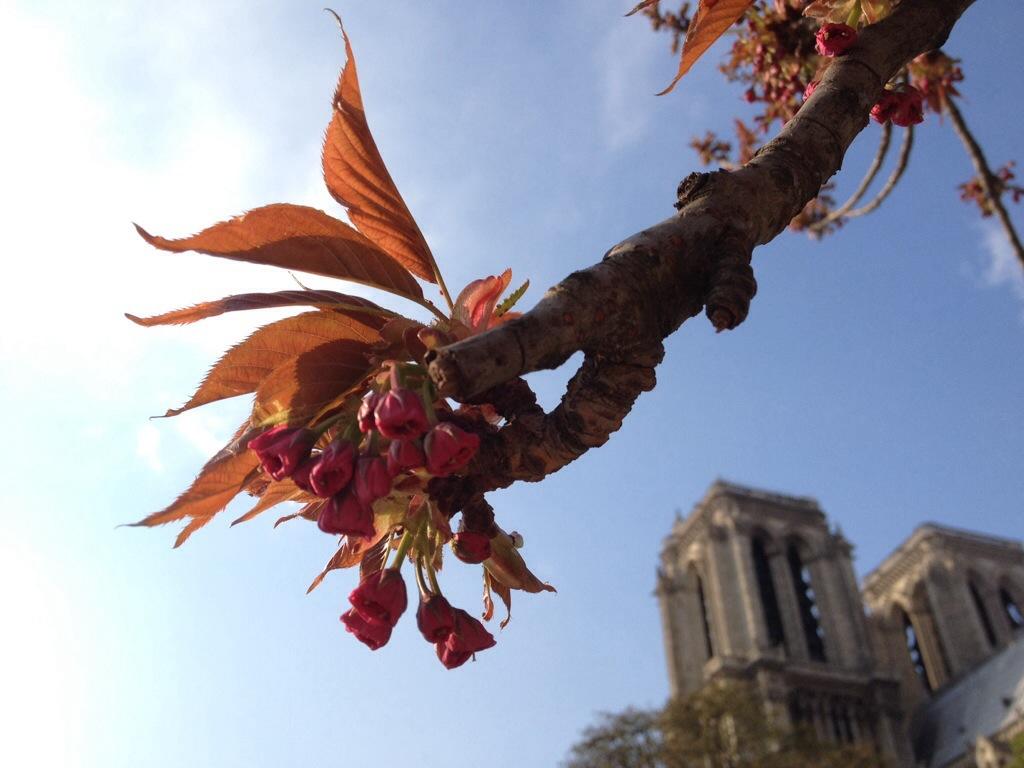 Bloesem in Parijs