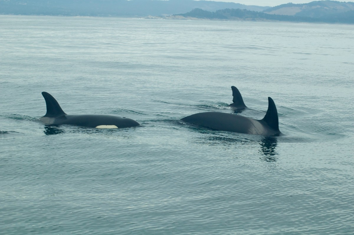 Orca's, California