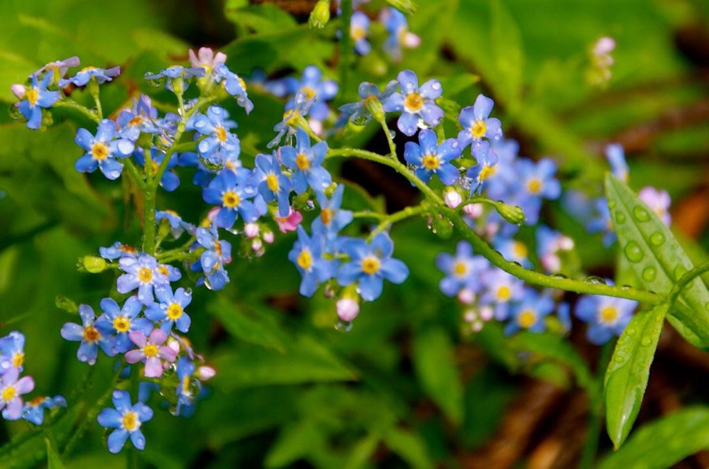 Bloemen in de bergen van Oostenrijk