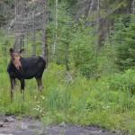 Algonquin Provincial Park, Canada