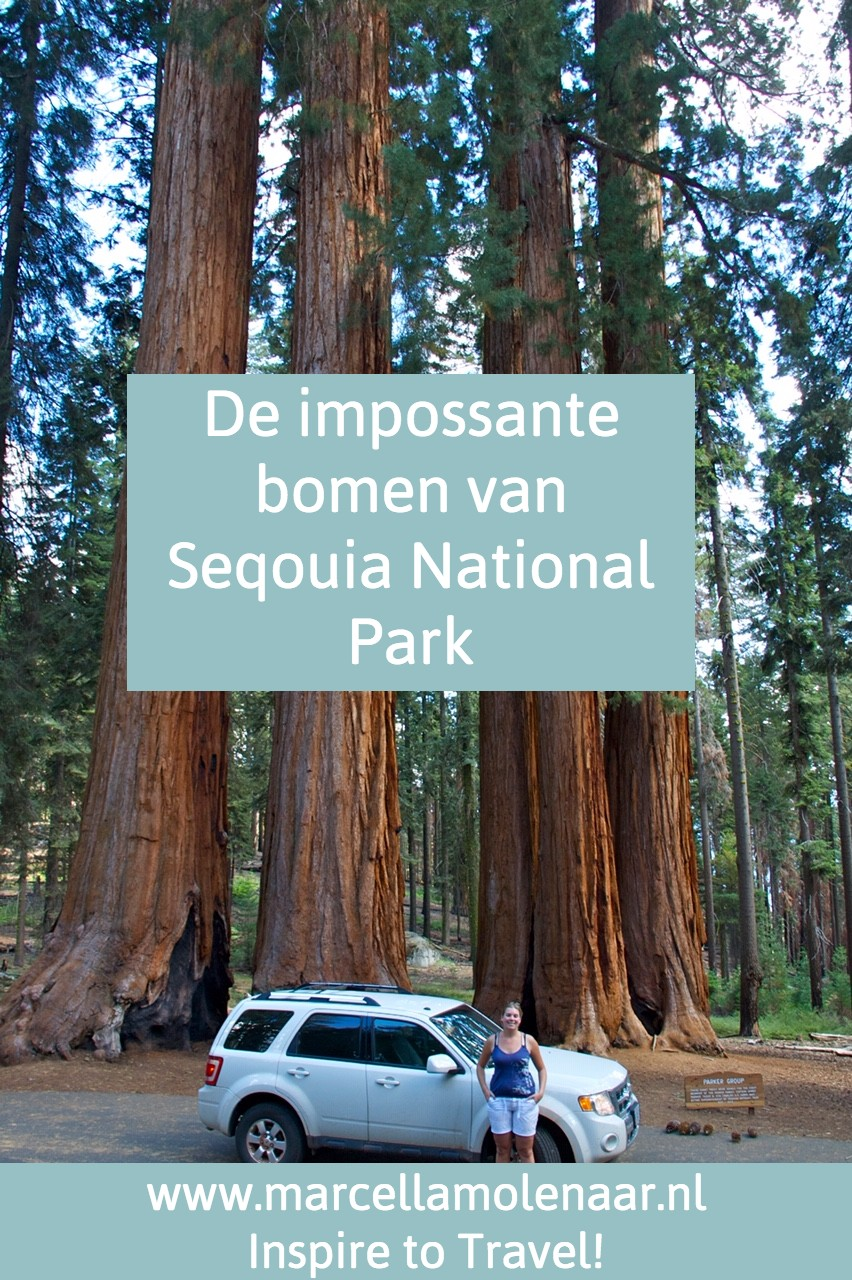 Sequoia National Park America