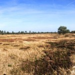 Nationaal Park Drents-Friese Wold
