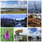 Lauwersmeergebied