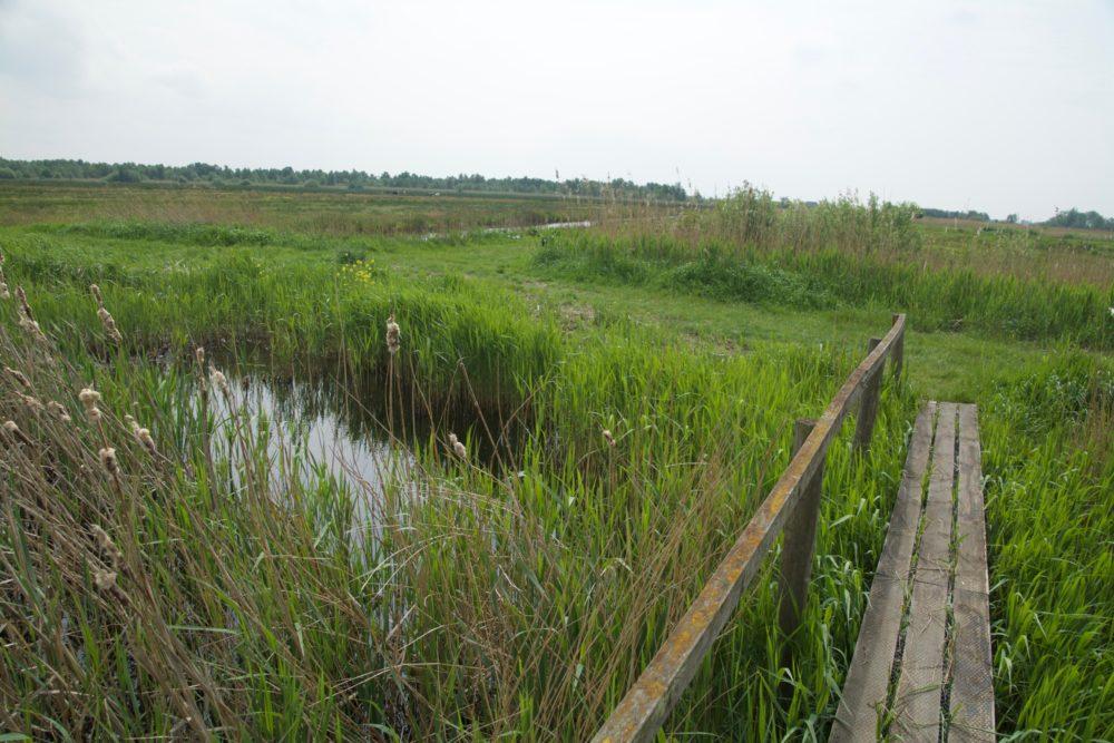 De Kraanlannen, Veenhoop