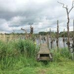 Nationaal Park De Alde Feanen