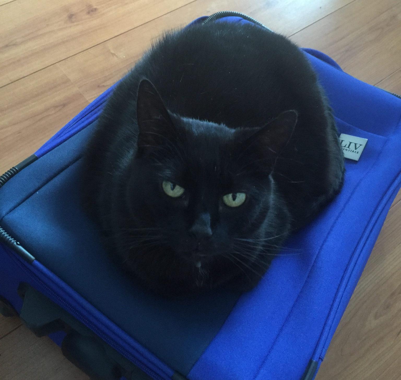Puma koffer