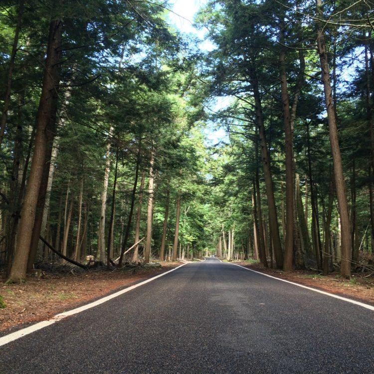 Tunnel of Trees, Michigan