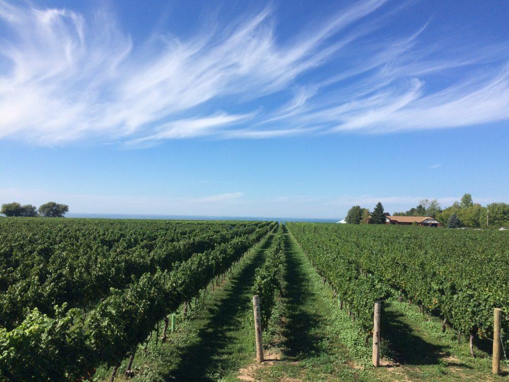 Winery, Canada