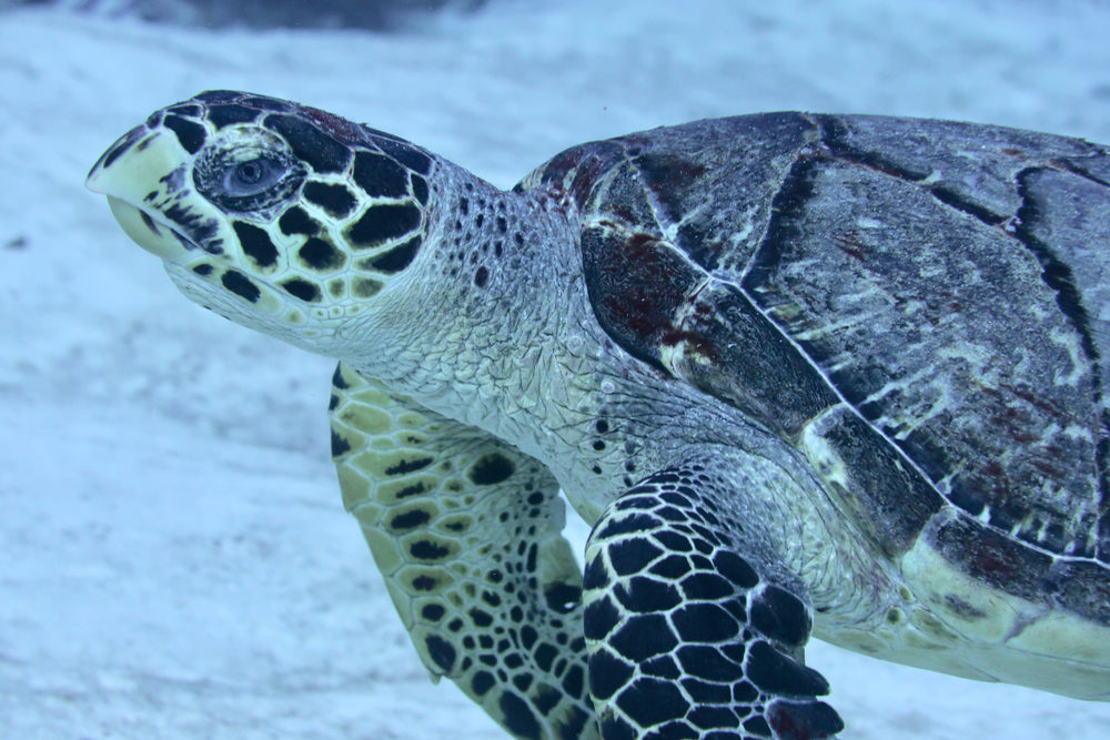 shutterstock Mexico turtle