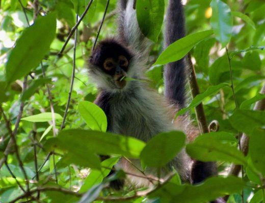Monkey Mexico