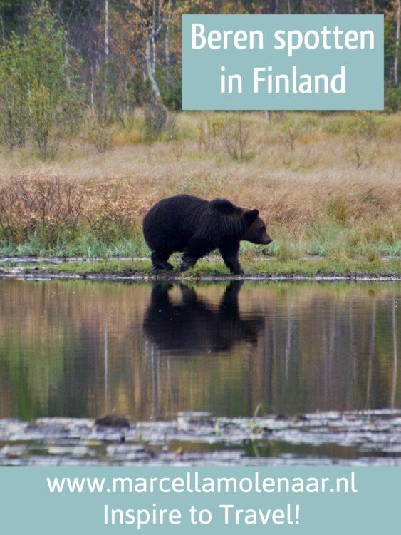 Bear Finland
