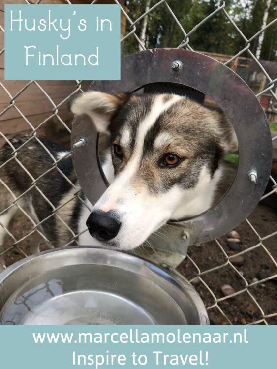 Vuokatti Husky Finland
