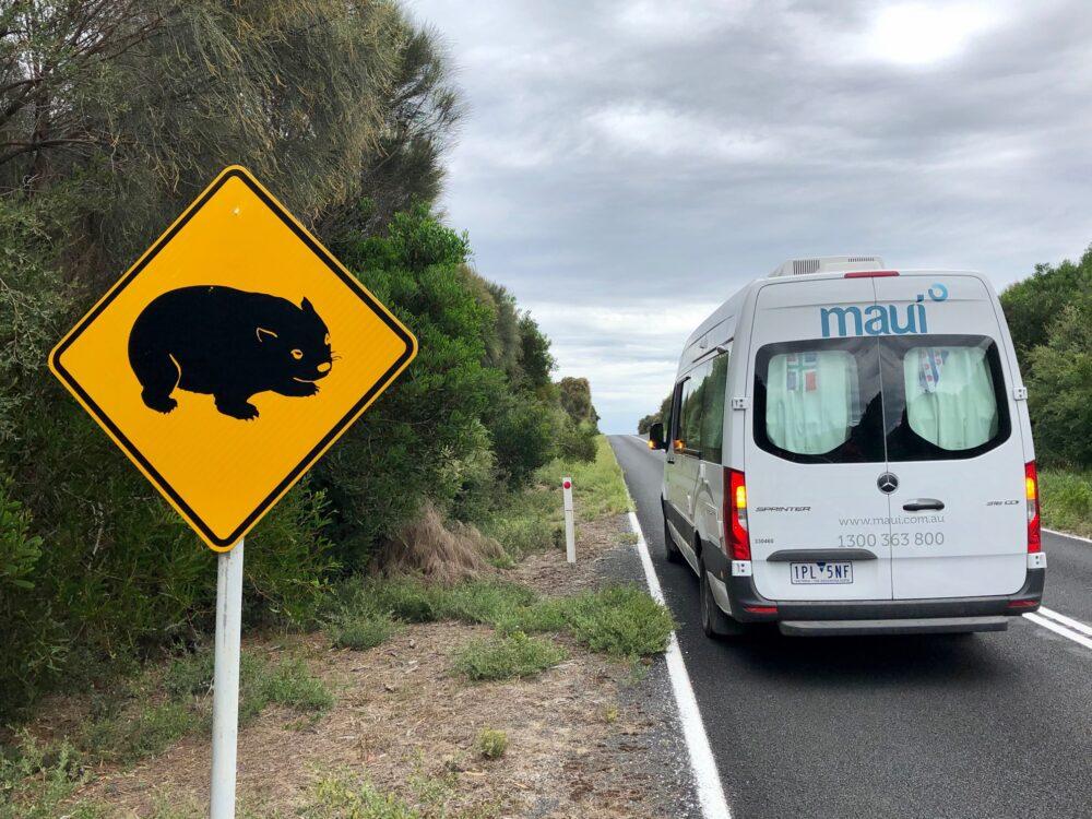 Camper Wombat Australia