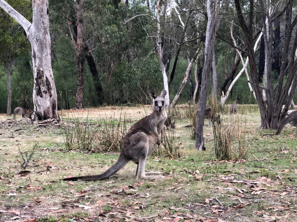 Smiths Mill Campground Grampians National Park Australia