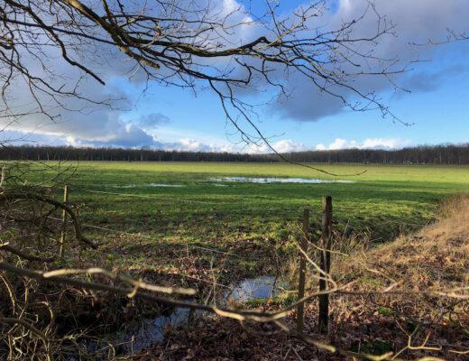 Strubben kniphorstbosch Drenthe